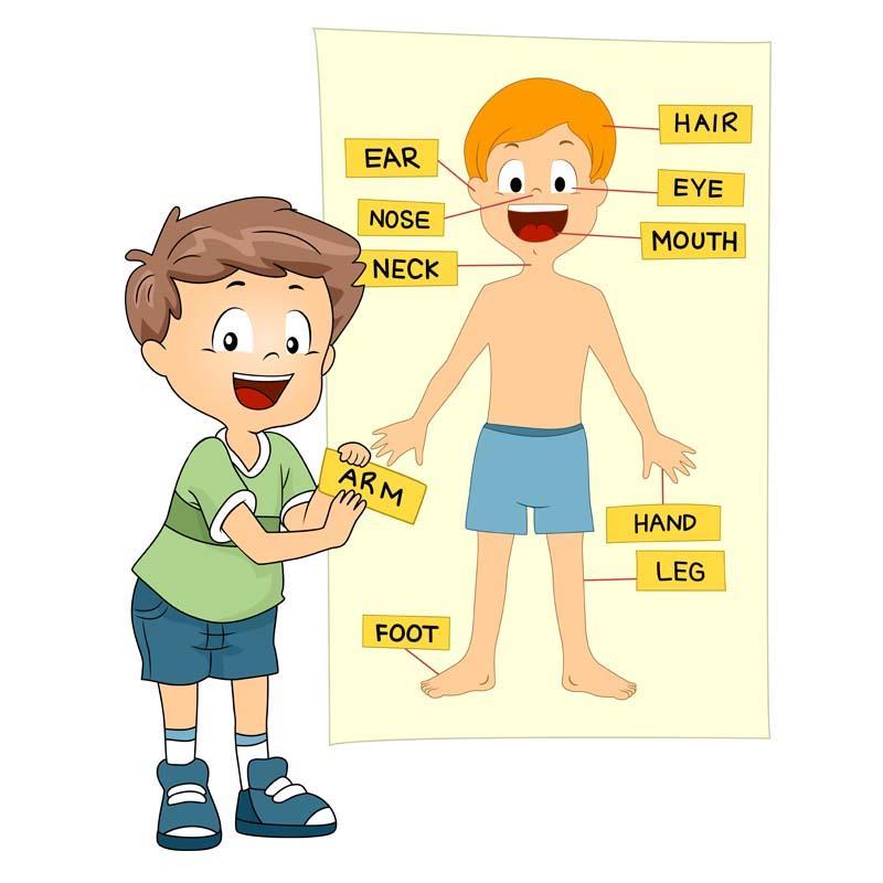 partes del cuerpo en inglés